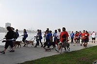 Dr. Arambulo Photos Lakewood - 2015 K9 cancer walk 11