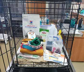 Pet Evacuation Kit Image 1