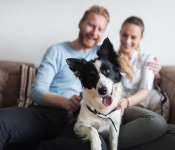 Companion Animal Dentistry Lakewood Prevent Pets Dental