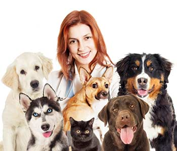 Veterinarian and dogs and cat