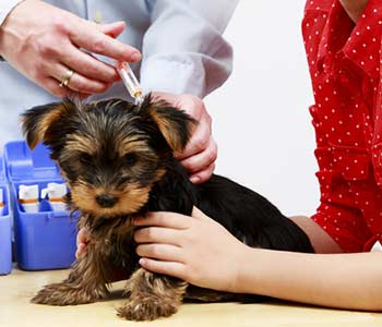 Vaccinations for Your Pet in Lakewood area Image 1