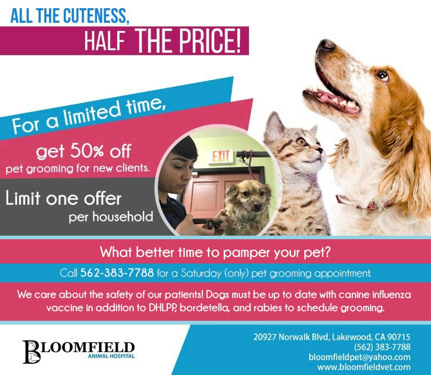 Bloomfield Animal Hospital - 50% Off Special promotion