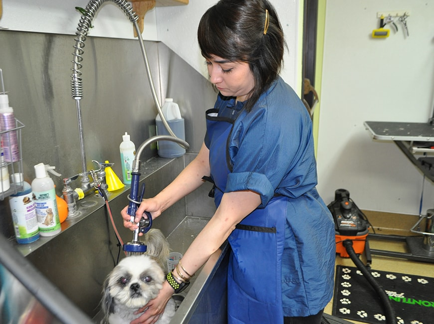 Grooming Services at Bloomfield Animal Hospital 4