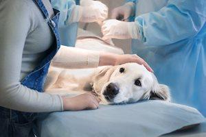 Bloomfield Animal Hospital - Pet Dog - News Feed