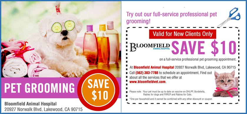 Bloomfield Animal Hospital - Special promotions - Expert pet grooming services