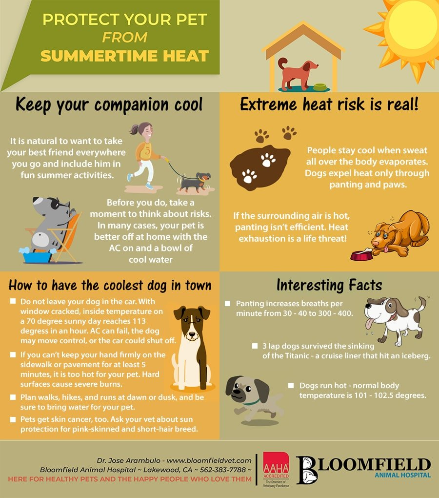 Protec Your Pet from Summer Heat