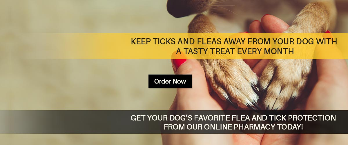 Get your dog's favorite flea and tick protection from Bloomfield Animal Hospital online pharmacy today!