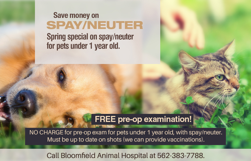 Bloomfield Animal Hospital - Special promotions - Free puppy or kitten exams
